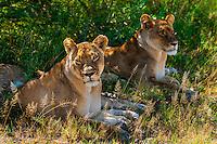 Nxai Pan National Park, Botswana.