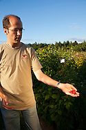 USA, Oregon, Corvallis, Oregon State University horticulture PhD student shows us red raspberries, MR