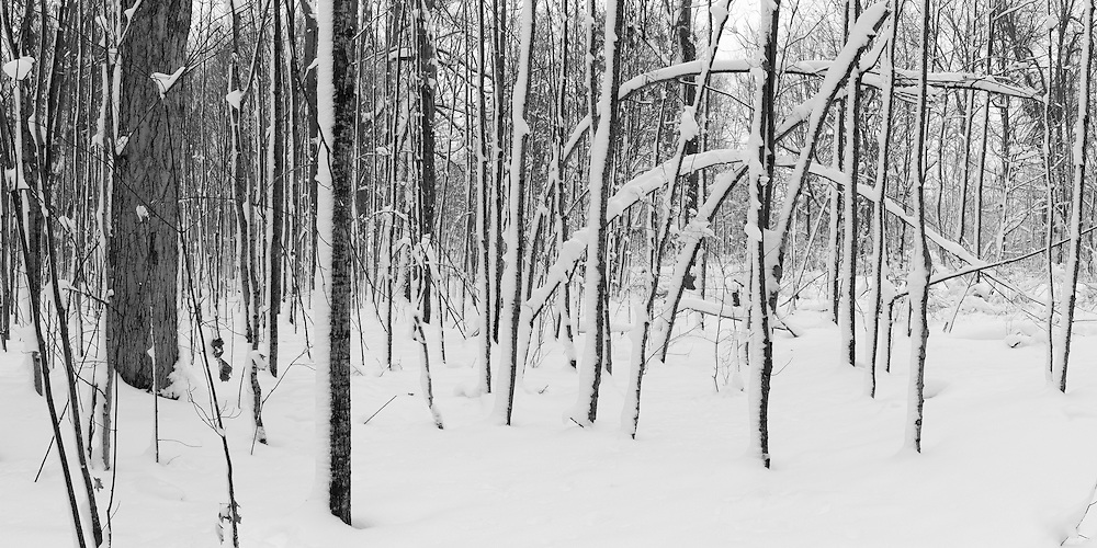 http://Duncan.co/bent-trees-in-the-snow