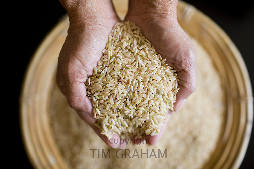 Asian woman holds handful of wholegrain rice. Rice has become an expensive commodity as its in short supply.