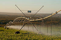 Pivot crop sparaying, Western Cape, South Africa