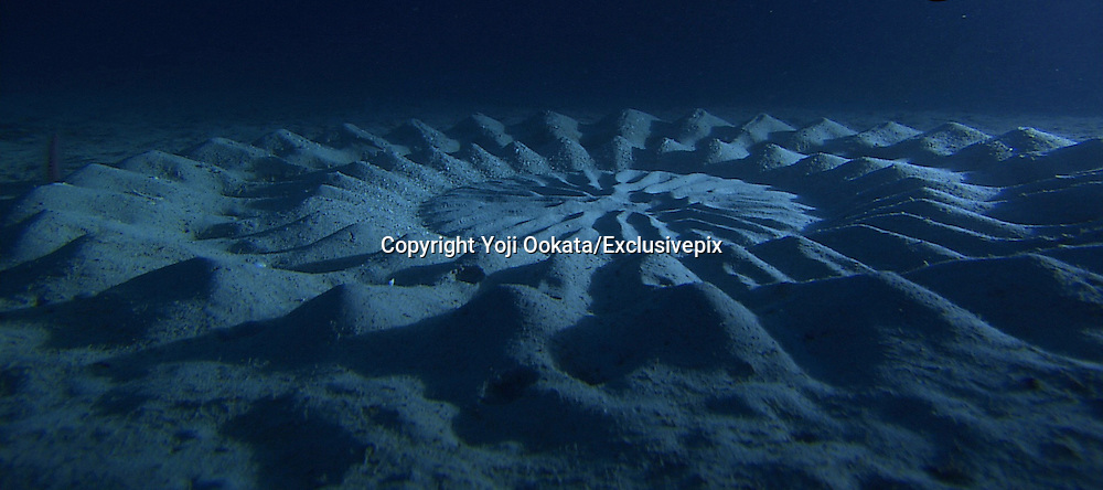 Crop Circles on the ocean floor<br /> <br /> From the Department of Awesome Natural Wonders come these mysterious patterns on the ocean floor off the southern coast of Japan. Japanese scuba diver and photographer Yoji Ookata, who has spent the last 50 years exploring and documenting his underwater discoveries off the coast of Japan, spotted these beautiful and puzzling patterns in the sand, nearly six feet in diameter and 80 feet below sea level, during a dive near Amami Oshima at the southern tip of the country.<br /> Using underwater cameras the team discovered the artist is a small puffer fish only a few inches in length that swims tirelessly through the day and night to create these vast organic sculptures using the gesture of a single fin. Through careful observation the team found the circles serve a variety of crucial ecological functions, the most important of which is to attract mates. Apparently the female fish are attracted to the hills and valleys within the sand and traverse them carefully to discover the male fish where the pair eventually lay eggs at the circle&rsquo;s center, the grooves later acting as a natural buffer to ocean currents that protect the delicate offspring. Scientists also learned that the more ridges contained within the sculpture resulted in a much greater likelihood of the fish pairing. <br /> &copy;Yoji Ookata/Exclusivepix
