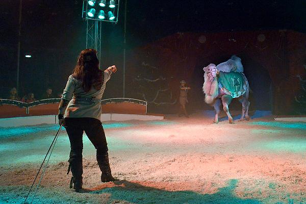 Nederland, Nijmegen, 29-12-2014In het kerstcircus in Nijmegen treden voor waarschijnlijk de laatste keer wilde zoogdieren op. Het kabinet heeft besloten dat dit in 2015 verboden wordt. Het verbod geldt alleen voor wilde zoogdieren zoals olifanten , leeuwen en tijgres, zebras, apen enz. Tijdens de voorstelling van circus Freiwald neemt olifant Buba, 39 jaar waarvan 22 bij het circus, alvast afscheid van het publiek. In de show zitten acts met katten, paarden en boerderijdieren. ook is er acrobatiek, koordansen en een clown.Foto: Flip Franssen/ Hollandse Hoogte