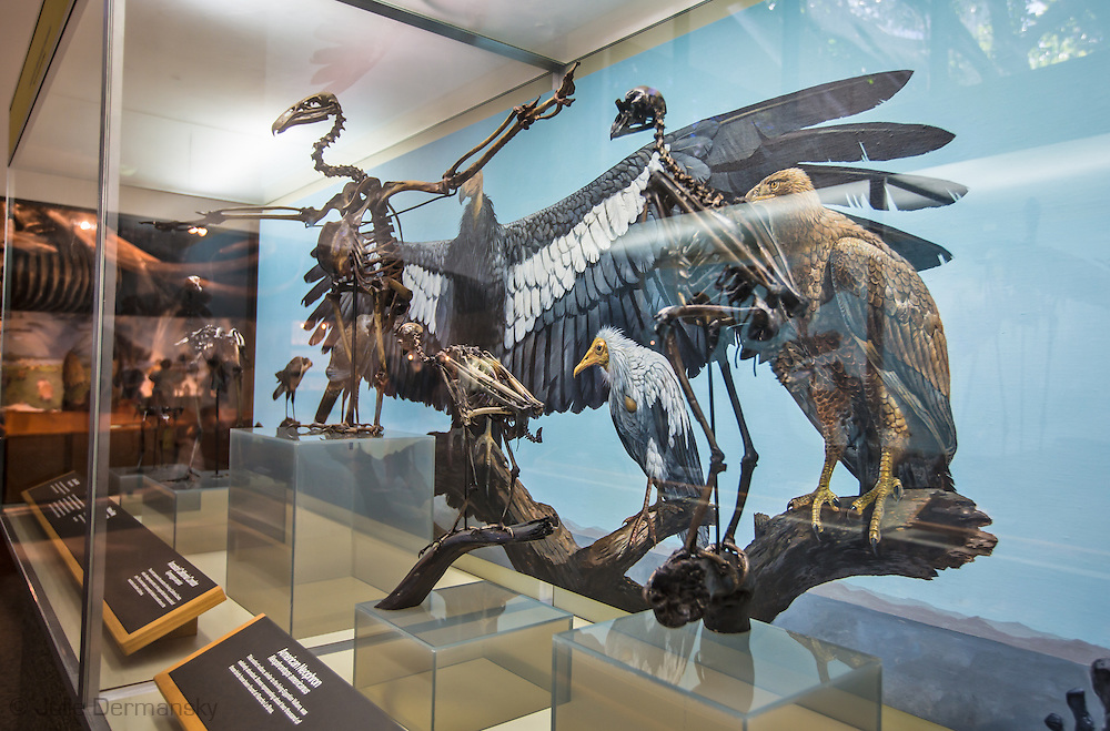 Page Museum at the La Brea Tar Pits | Documentary ...