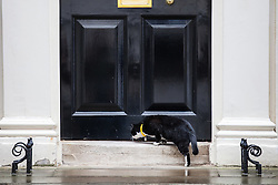 © Licensed to London News Pictures. 02/08/2016. London, UK. Palmerston, the cat belonging to the Foreign and Commonwealth Office, sniffs under the door to 11 Downing Street. Palmerston and Larry, the Prime Minister's cat, have been seen fighting in recent weeks, and an animal charity has reportedly been called in to arbitrate the dispute. Photo credit: Rob Pinney/LNP