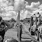 Refugees cross the hungarian border from Serbia, on september 12, 2015, as hungarian workers (some of them are prisonners) finish the new fence. Thousands of refugees, most of them from Syria, cross this border everyday with the hope to reach european countries like Sweden or Germany. The next step for them will be to register in Hungary before continuing their long journey.