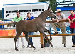027 - Ilavsca Deux Fortuna<br /> Finale springveulens<br /> KWPN Paardendagen Ermelo 2013<br /> © Hippo Foto - Leanjo de Koster