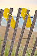 Yellow flip-flops await beach walkers where they were hung on a sand fence.