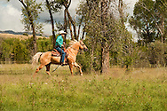 Trail Riding, Cowboy lopes on Quarter Horse, Montana, <br /> MODEL RELEASED, PROPERTY RELEASED