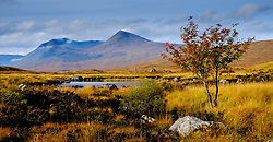 Rannoch Moor, Highlands of Scotland in autumn<br /> <br /> (c) Andrew Wilson | Edinburgh Elite media