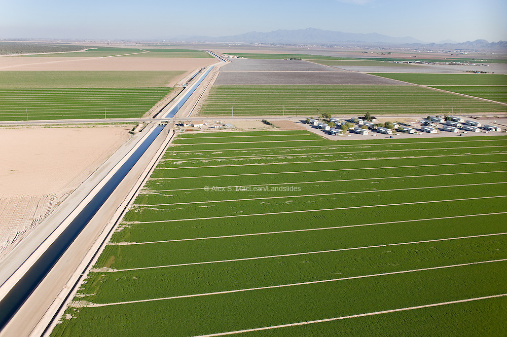 Lush, irrigated fields belie the arid climate of Buckeye, Arizona.  Its agricultural fields are irrigated with groundwater, as well as surface water that is transferred through the Buckeye and Roosevelt Irrigation District canals.