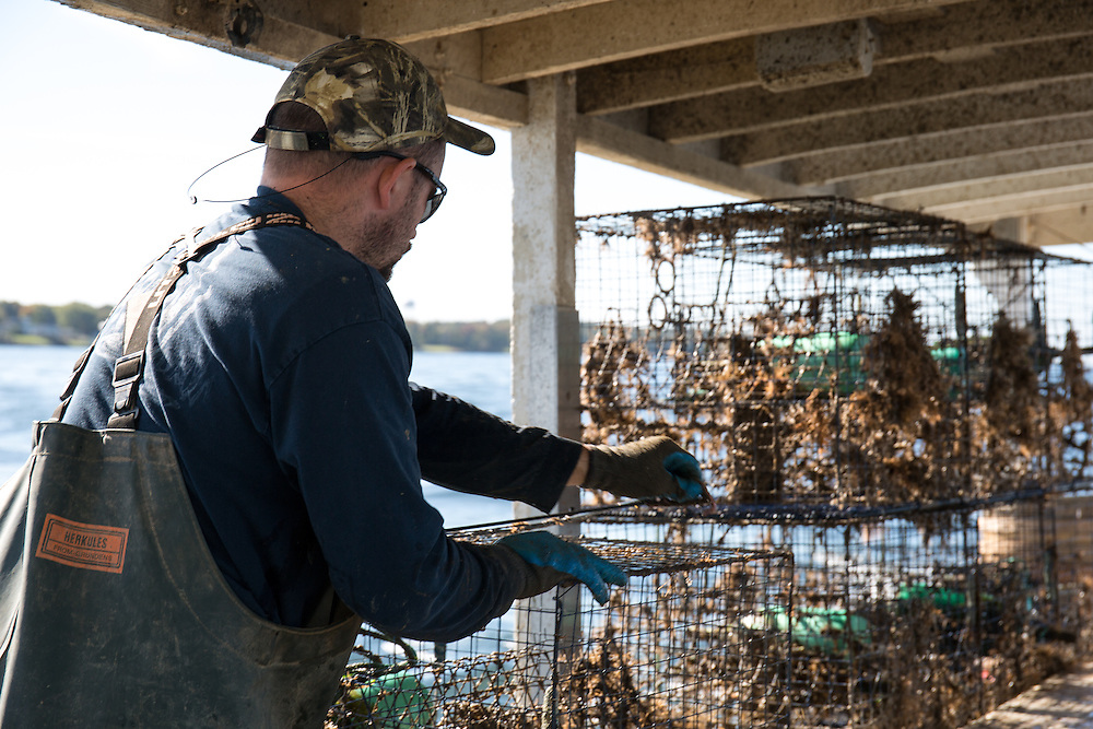 Ryan Ribb checks crab traps recently pulled up from the bay | October 11, 2015