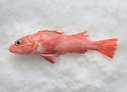 Groundfish from the West Coast Groundfish Trawl Fishery which has been certified by the Marine Stewardship council.