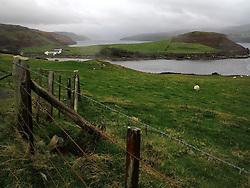 UK SCOTLAND ISLE OF SKYE 7OCT13 - Sheep graze by the roadside on the Isle of Skye, western Scotland.<br /> <br /> jre/Photo by Jiri Rezac<br /> <br /> © Jiri Rezac 2013