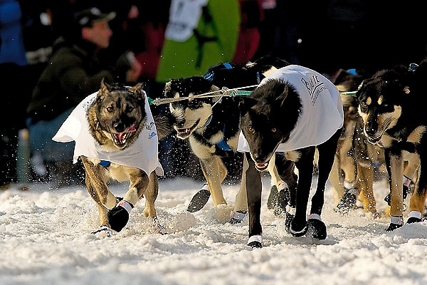 04 March 2006: Anchorage, Alaska - The team of four time champion, Martin Buser head out at the Ceremonial Start in downtown Anchorage of the 2006 Iditarod Sled Dog Race
