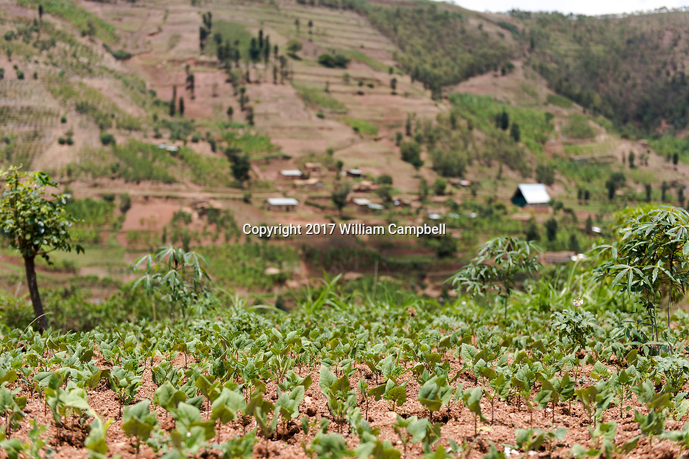 KAYUMBU RWANDA-OCT 13:  Rural Rwandan countryside. Rwanda is the most densely populated country in Africa. There are an estimated 352 people per square kilometer.  35 percent of the population engage in subsistence agriculture and live under the poverty line.  But with a growth rate of 6-8 percent  since 2003 the poverty rate is declining. (Photo by William Campbell-Corbis via Getty Images)