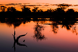Flooded trees in Cooper Creek reflect as silhouettes in light of dusk,.Cooper Creek, South Australia, Australia
