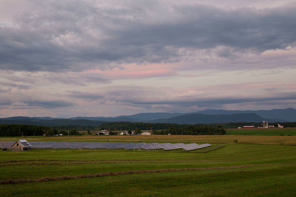 As dusk falls over the Green Mountains, Dorset Tunis sheep graze under solar panels at Open View Farm in New Haven, Vt., on Aug. 19, 2017. The 2.49-megawatt solar array was designed and built by Vermont-based groSolar in 2013 for owners Cross Pollination Inc. The solar array generates enough power for 350 homes each year. (Photo by Geoff Hansen)
