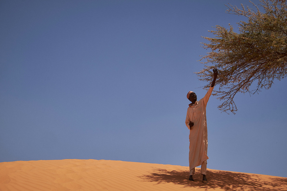 A man picks leaves off a tree on sand dunes in the village of Guidan Kaji near the border with Nigeria on the outskirts of Diffa, Niger on February 13, 2016. Displaced people from Niger and Nigeria are sheltering in the village after fleeing at the nearby border. Many of the families had witnessed attacks by Boko Haram in their villages or had fled because of other villages around them being attacked. Caritas undertook a distribution of sleeping covers, mosquito nets, pots and money transfers.