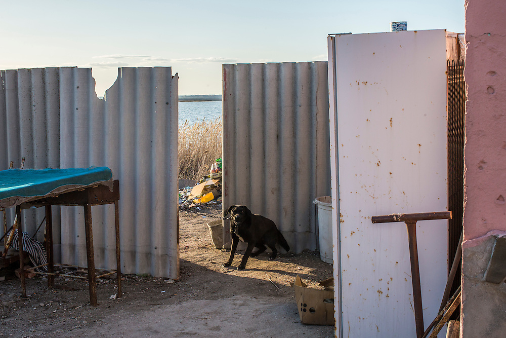 A dog is tied up near the Sea of Azov on Friday, April 10, 2015 in Siedove, Ukraine.
