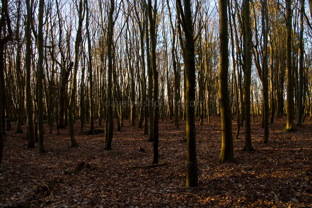 The Woods at Rath Lugh, near Skryne or Skreen Co. Meath. These woods on the the esker and beside the promontory fort of Rath Lugh that are currently being threatened by the construction of the M3 motorway between Dublin and Navan.