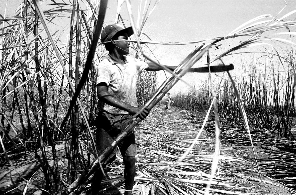Criança canavieira - Rio de Janeiro..Sugar cane child - Rio de Janeiro.