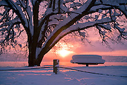 Idaho, Coeur d' Alene. A snow covered lakeshore tree and table in the pink light of a winter sunset on Lake Coeur d' Alene. . PLEASE CONTACT US FOR DIGITAL DOWNLOAD AND PRICING.