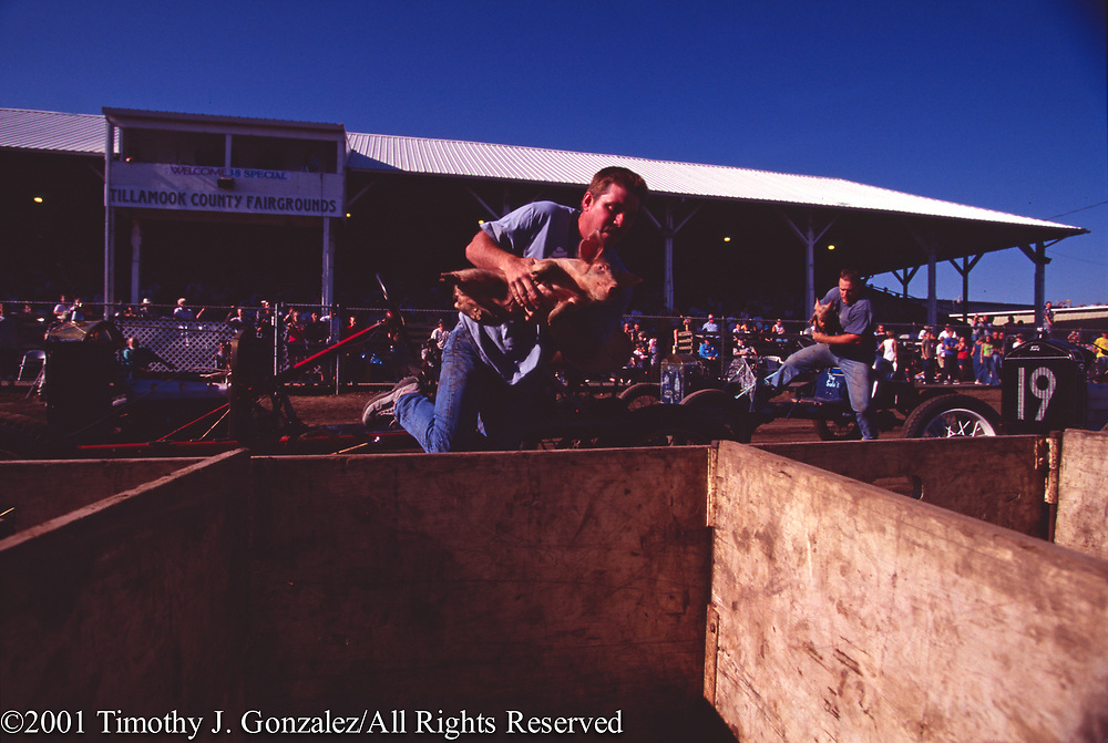 Pig and Ford race during the 2001 Tillamook County Fair, Tillmook, Ore., Aug. 21, 2001.