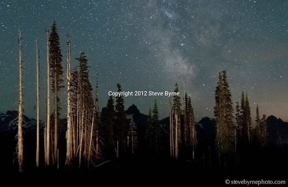 The Milky Way hangs high above trees and the Tatoosh Range.  Mount Rainier National Park, Washington.
