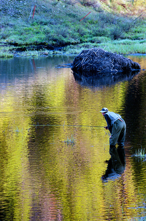 A flyfisherman drifts a fly on a Colorado beaver pond
