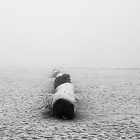 A man and his dog walking out of the frame. A scene filled with fog on the beach, with logs and snow.