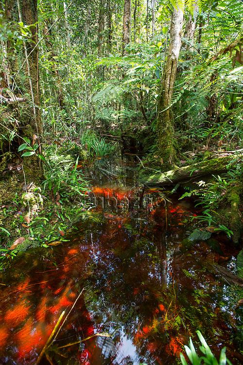 Stream in the jungle, Maliau Basin, Sabah, Malaysia, Borneo,