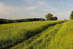 Walking in a field at Tufts School of Vet Medicine.  Grafton, Massachusetts.
