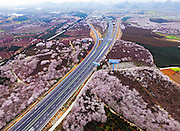 GUIYANG, CHINA - MARCH 16: (CHINA OUT) <br /> <br /> Aerial View Of Sea Of Flowers In Guiyang<br /> <br /> Aerial view image shows cherry blossoms, magnolia flowers and rape flowers form sea of flowers in Hongfeng Lake on March 16, 2016 in Guiyang, Guizhou Province of China. It\'s said that the large scale of flower area is a base of cultivating flower seedlings. <br /> ©Exclusivepix Media