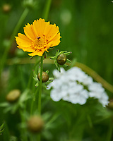 Wildflowers. Image taken with a Nikon Df camera and 70-300 mm lens