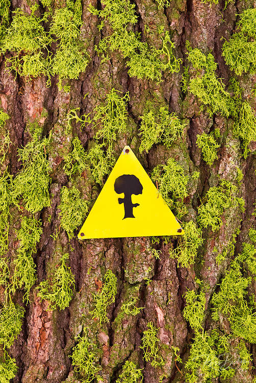 Ski trail marker on moss covered tree, Sequoia National Park, California