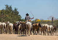A Brazilian cowboy driving horses and mules along the Trans-Pantanal Highway.