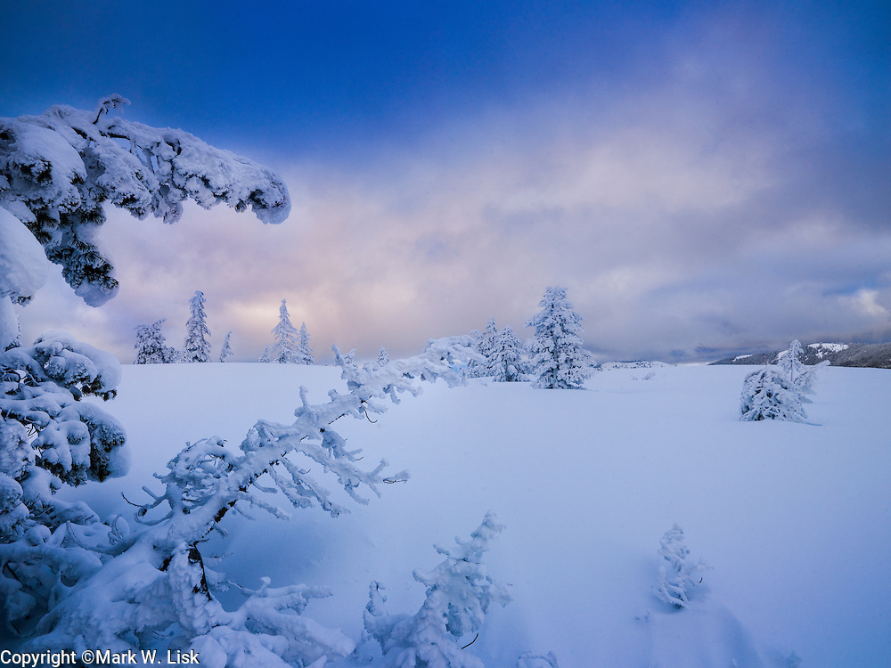 Snow flocked trees give a surreal look to forest in the Crystal Lake Wilderness study.