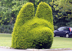 ©  licensed to London News Pictures KENT. UK. 28/04/2011. A bush cut to the shape of a dog at the Metropolitian police dog training centre in Bromley today (28 June 2011). An officer has been treated in hospital following the deaths of two police dogs who were left in a car on one of the hottest days of the year. The animals were found collapsed in an unventilated vehicle at the Metropolitan Police's training centre. Please see special instructions..Picture credit should read Grant Falvey/LNP.