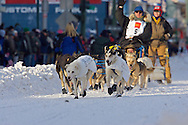 March 7th, 2009:  Anchorage, Alaska - The dogs of Rick Larson of Sand Coulee, Montana along 4th Avenue at the start of the 2009 Iditarod.