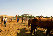 Henry Real Bird, Mark Real Bird, Real Bird Bucking Horses, look over their horses, Crow Fair Rodeo, Montana