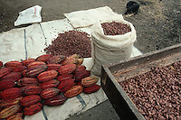 July 1995, Ecuador --- Cacao Beans and Pods on the Ground --- Image by © Owen Franken/CORBIS