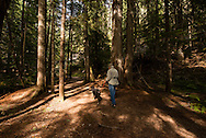 Ross Creek Cedars Scenic Area, Montana, Western Red Cedars, tourists, dogs, hike, MODEL RELEASED, PROPERTY RELEASED