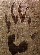 Black bear paw print on my garage door in Whitefish, Montana, USA