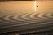 Sun shining on water sunset in winter on the River Deben, Ramsholt, Suffolk, England, UK