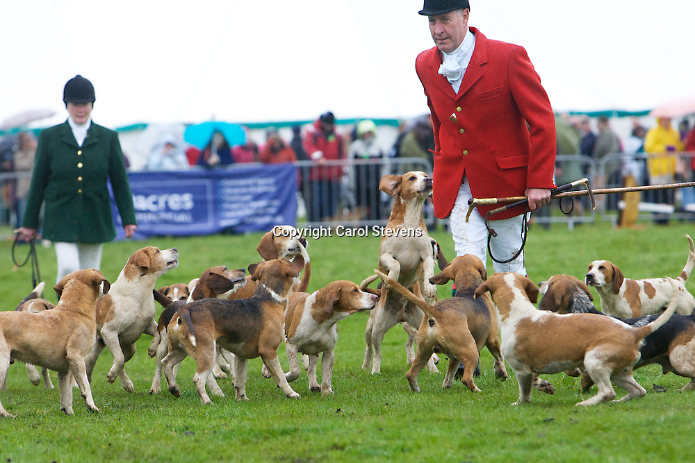 Airedale Beagles