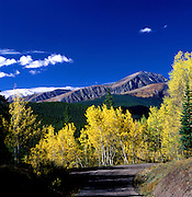 Autumn Aspen Trees on Boreas Pass Road near Breckenridge,  Summit County, CO