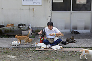 Aoshima, Ehime prefecture, September 4 2015 - Cat lovers interacting with cats at Aoshima island.<br /> Aoshima (Ao island) is one of the several « cat islands » in Japan. Due to the decreasing of its poluation, the island now host about 6 times more cats than residents.