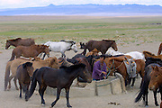 GOBI DESERT, MONGOLIA..08/24/2001.Gobi Gurvansaikhan National Park..Mongolians giving water to their horses at a well in the desert..(Photo by Heimo Aga)