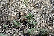 Wildlife photographs from Whitewater Draw Wildlife Area Arizona, USA